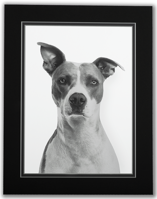 Images Web Technicare FoamBoard DigitalMatte Dog 1